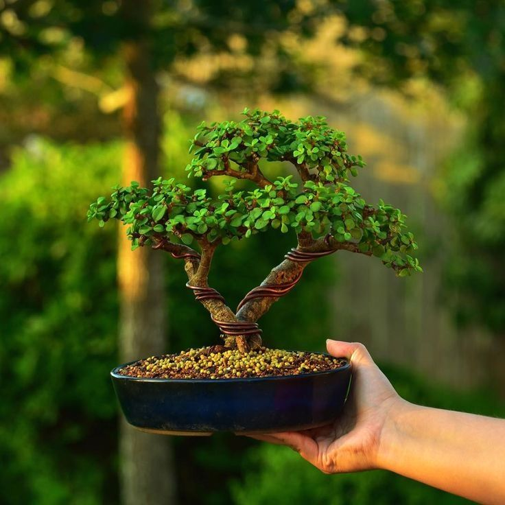 >Amazing tips for bonsai care, from beginners to experts