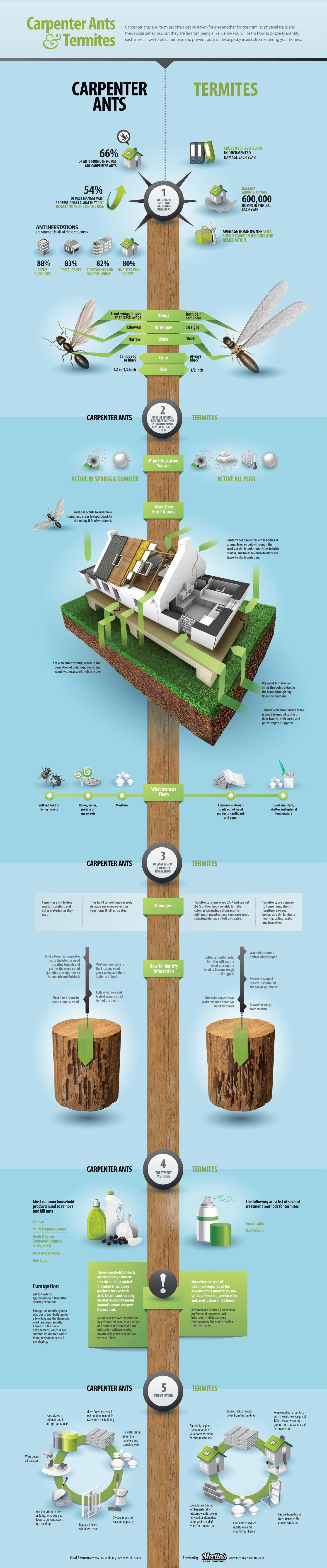 Carpenter Ants and Termites - #Infographic | Wood Destroying Insects ...