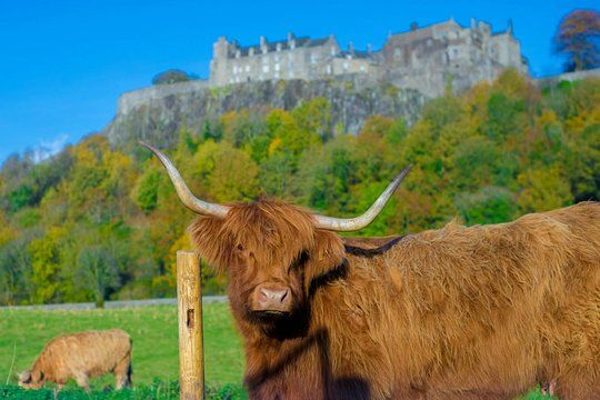 Stirling Castle,Trossachs National and Loch Lomond Day Tour from Edinburgh #lochlomond