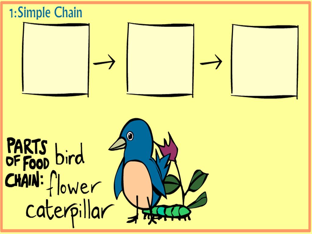 food chain | Biodiversity | Pinterest