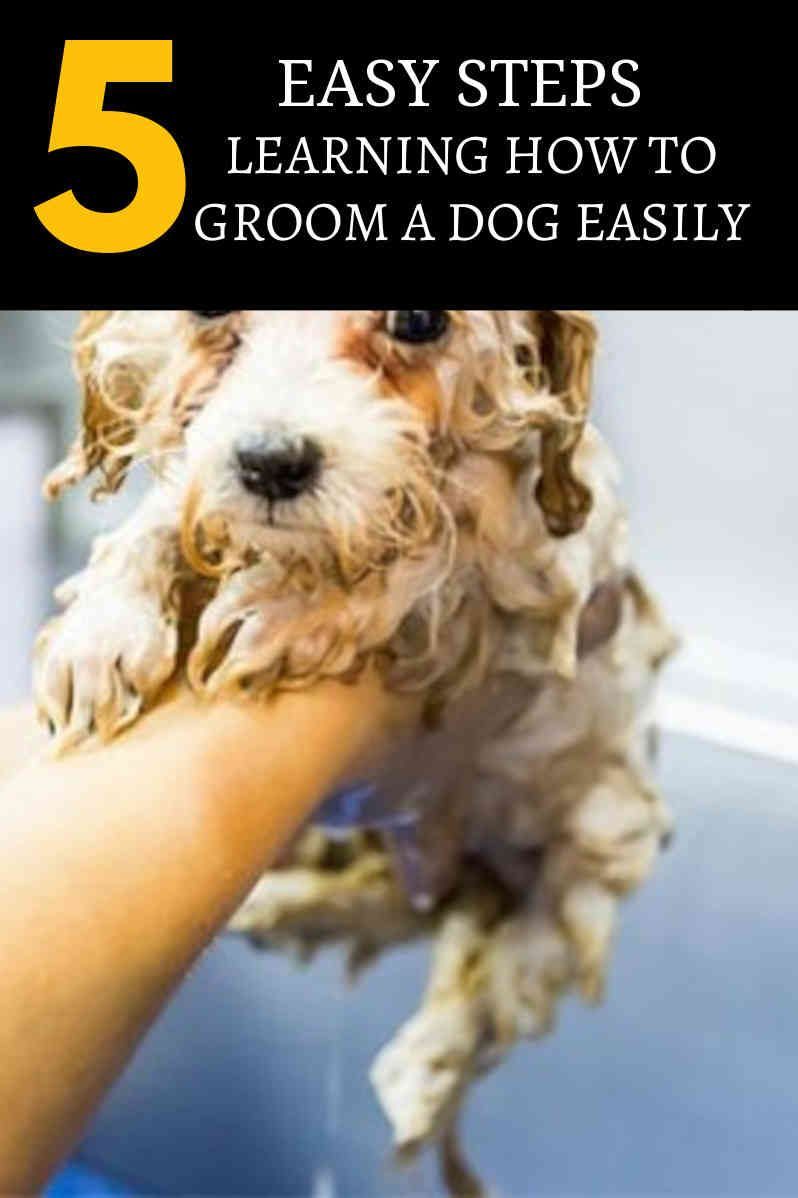Do it yourself dog grooming tips for everyone dog
