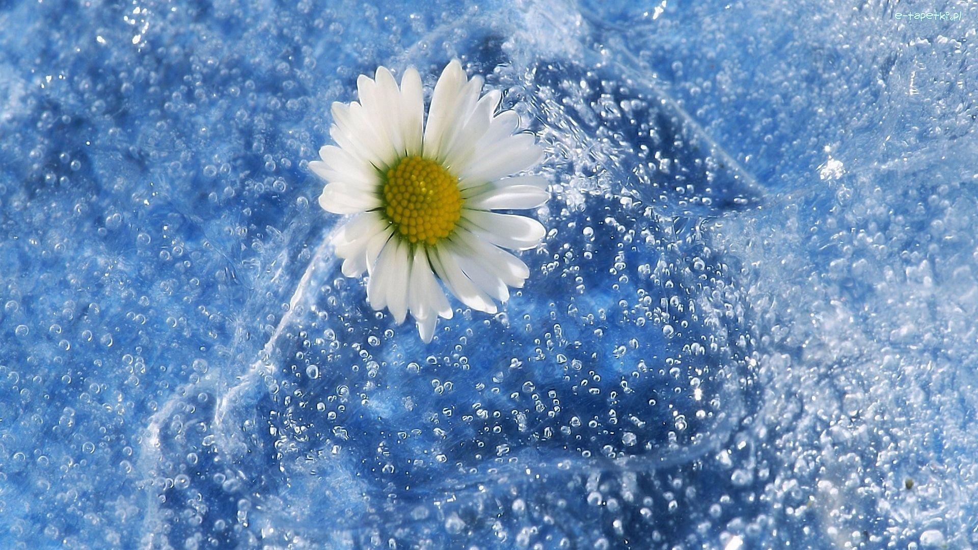 Kwiat Grafika Babelki Beautiful Flowers Wallpapers Flower Wallpaper Artistic Wallpaper