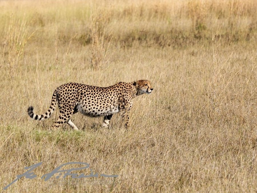 """500px / Photo """"After the Feast Moremi Game Reserve"""
