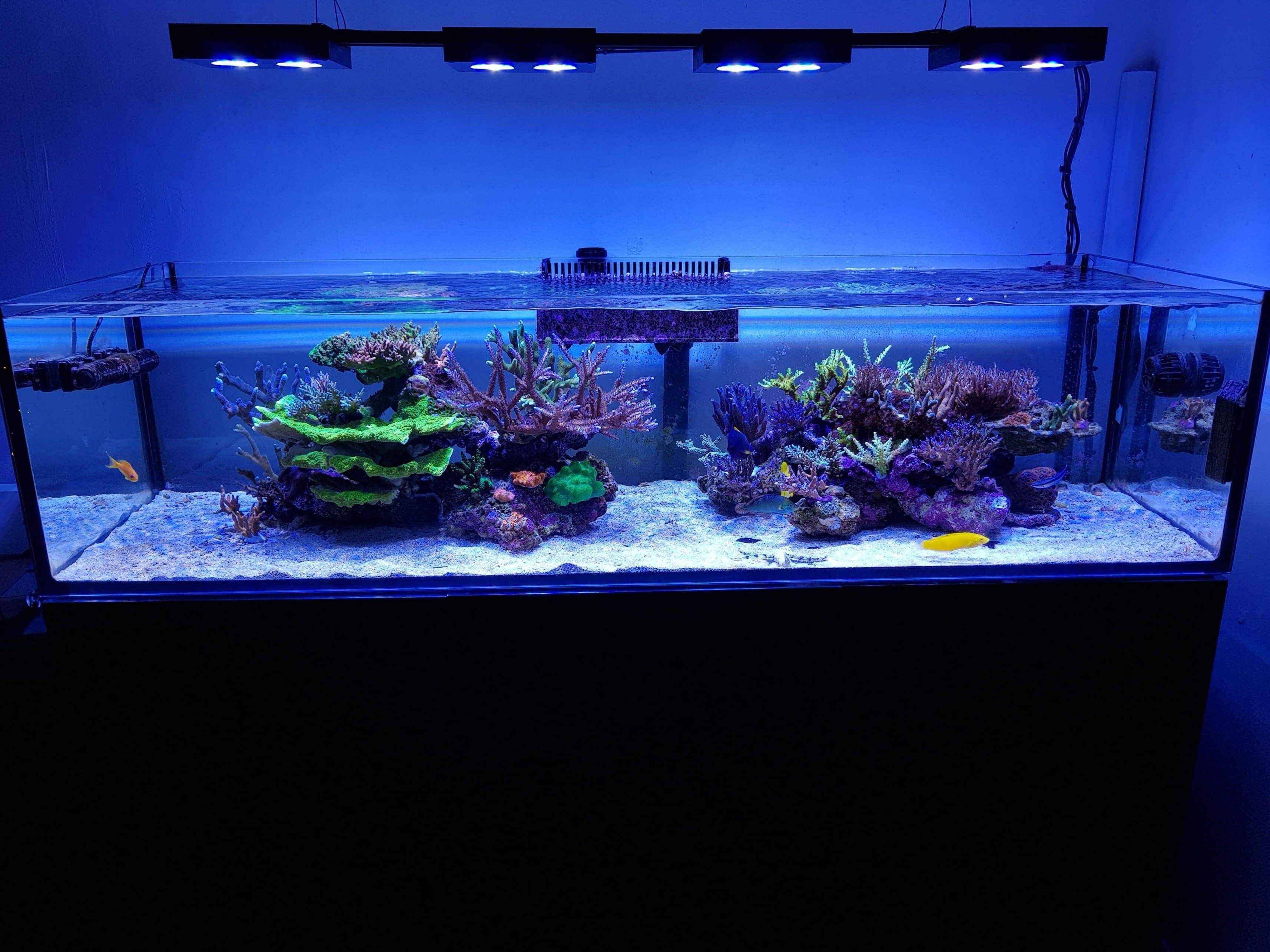 Mars Aqua 300 Watt Led Modification Meerwasser Aquarium Meerwasser Und Aquarien