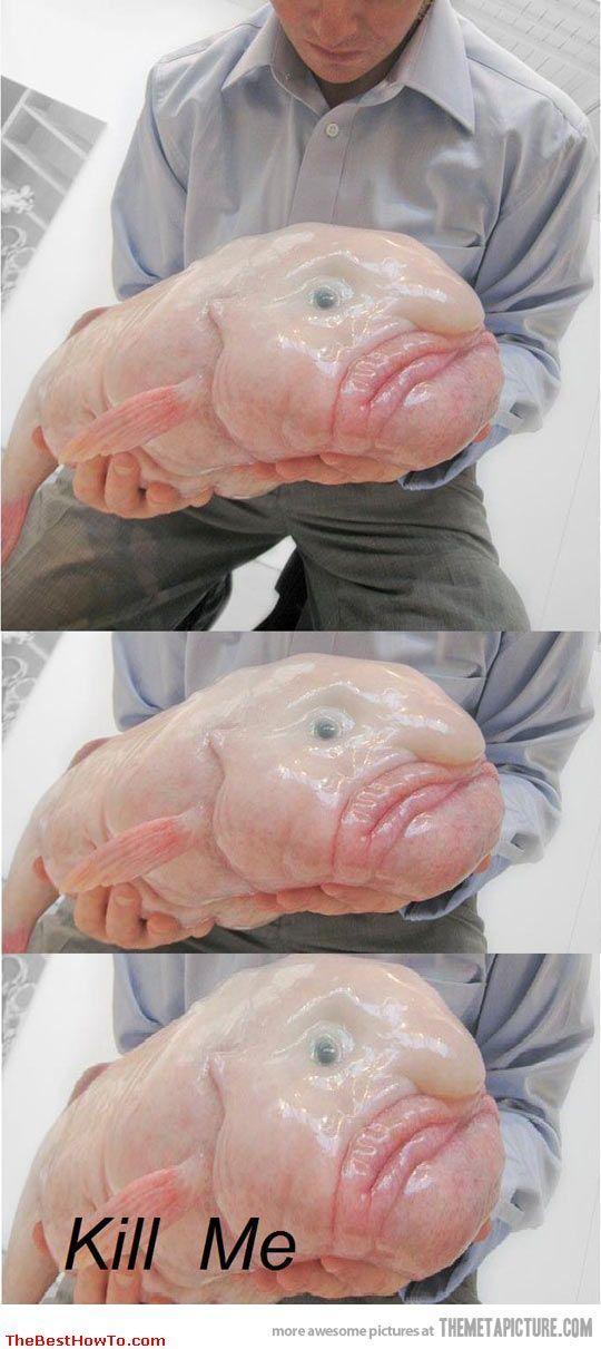 Very Rare Sea Animals very rare pictu...