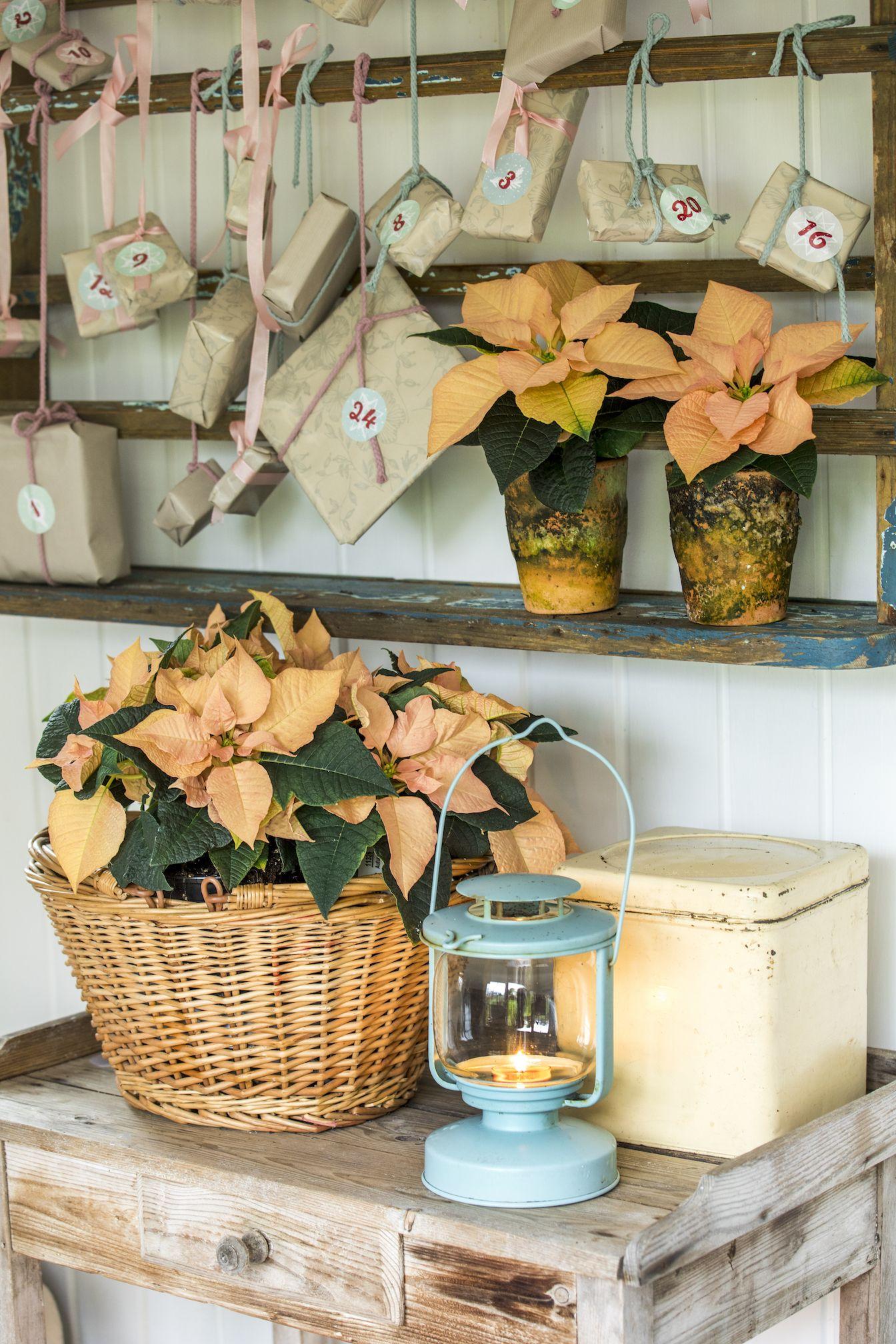 Easy decorating idea for a cozy home: DIY Advent calendar ...