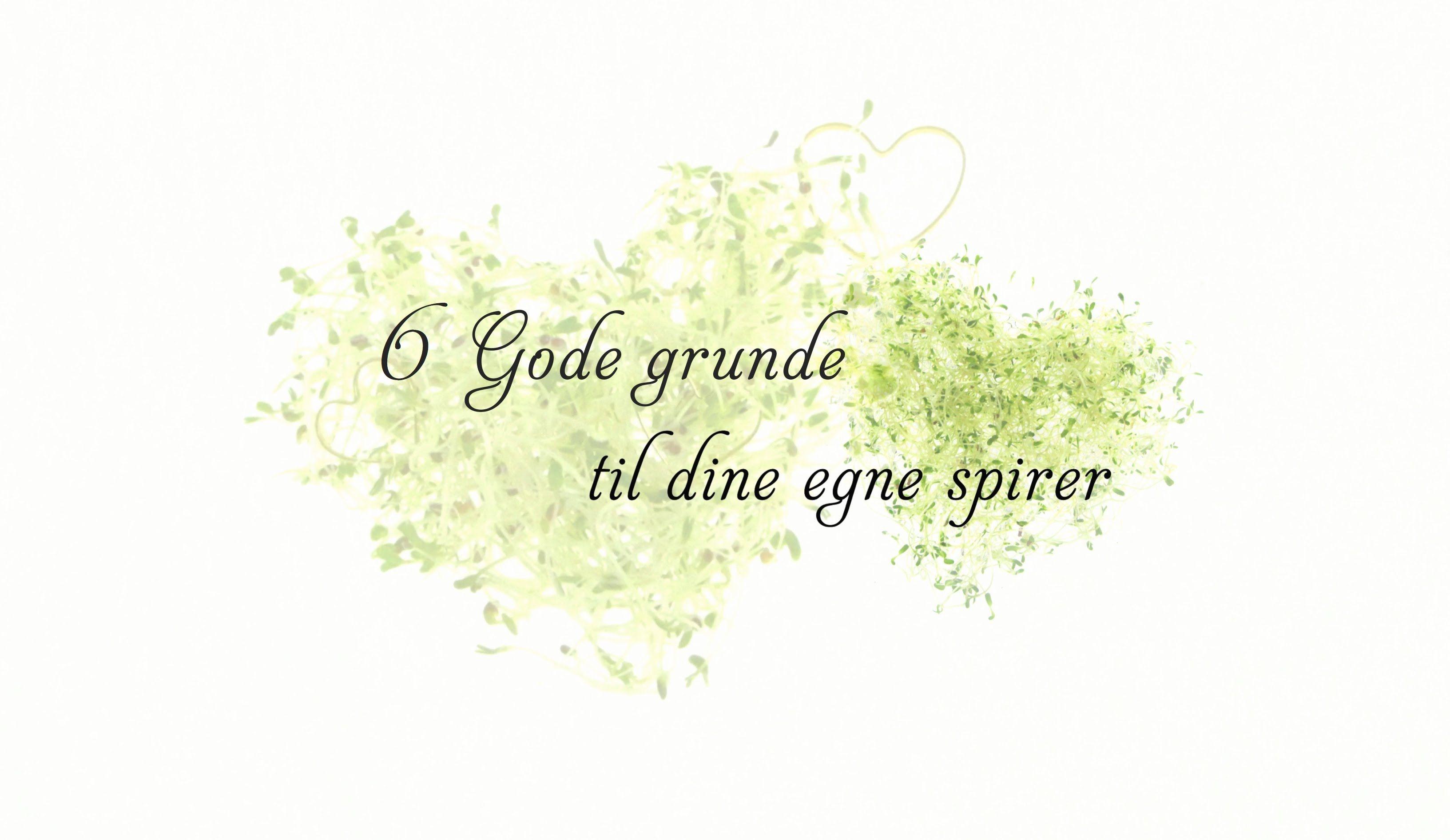 6 gode grunde til at dyrke spirer. Flere på https://spirefroe.dk/inspiration
