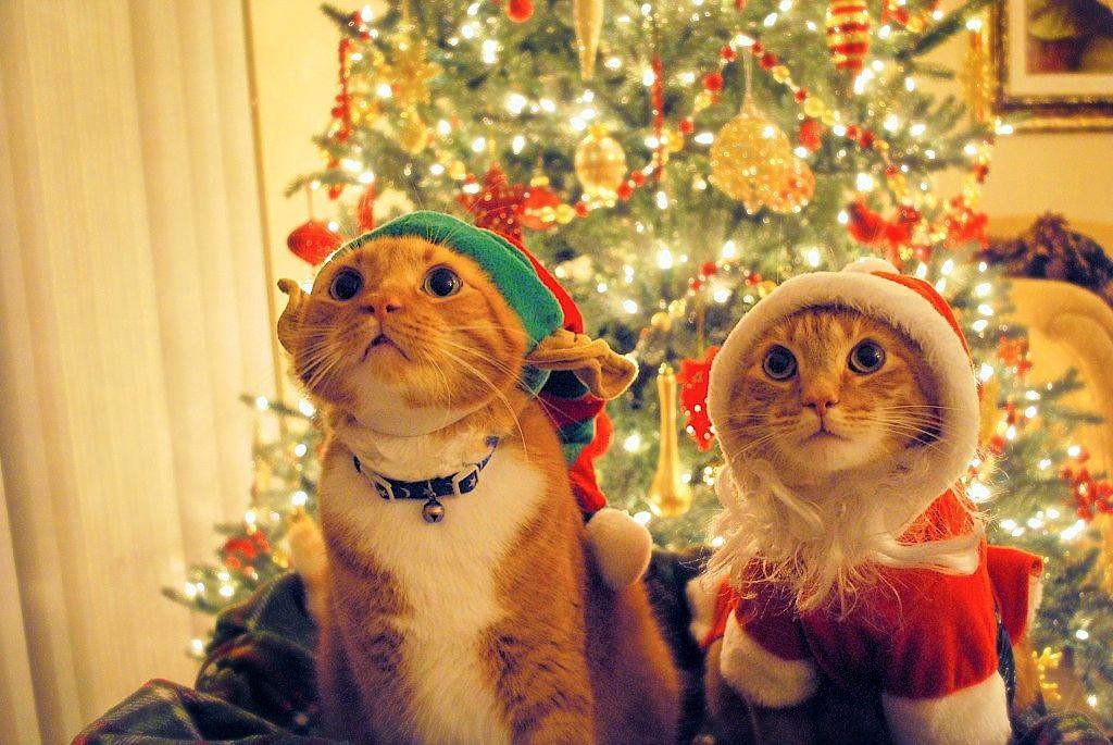kittehkats.tumblr.com/image/38619333867