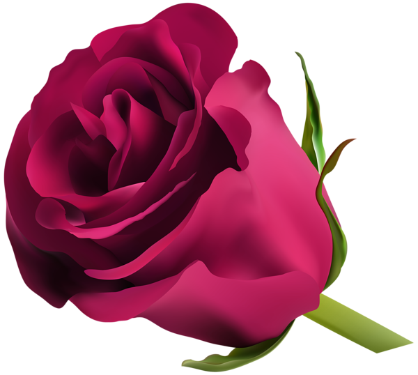 Pink Rose Png Clip Art Rosa Roxa Flores Azul Escuro Rosas Sao Vermelhas