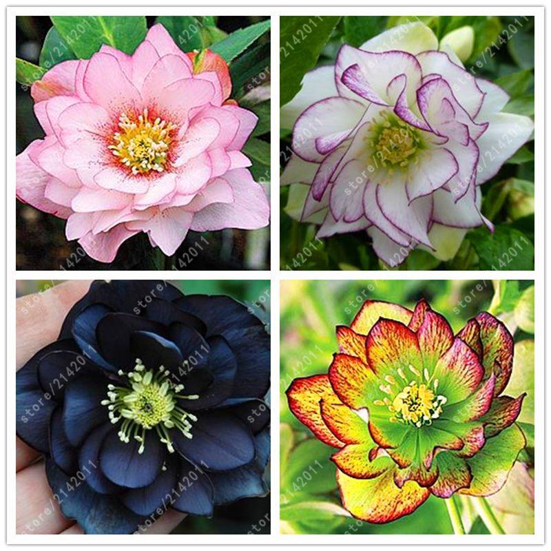 Семена цветов уличные фото