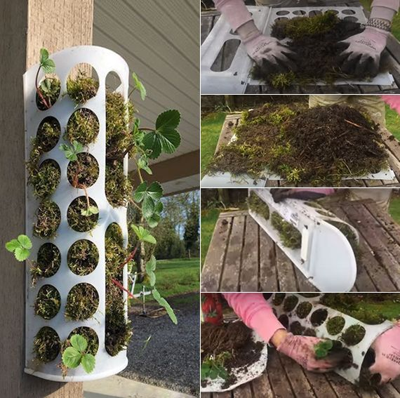 erdbeeren pflanzen in diy containers so geht s vertikaler garten vertikal und ikea. Black Bedroom Furniture Sets. Home Design Ideas