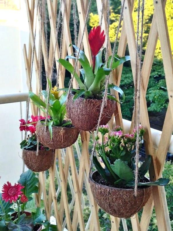 Hanging Coconut Planters Make For Adorable Patio Decor Hanging Plants Outdoor Hanging Plants Plants