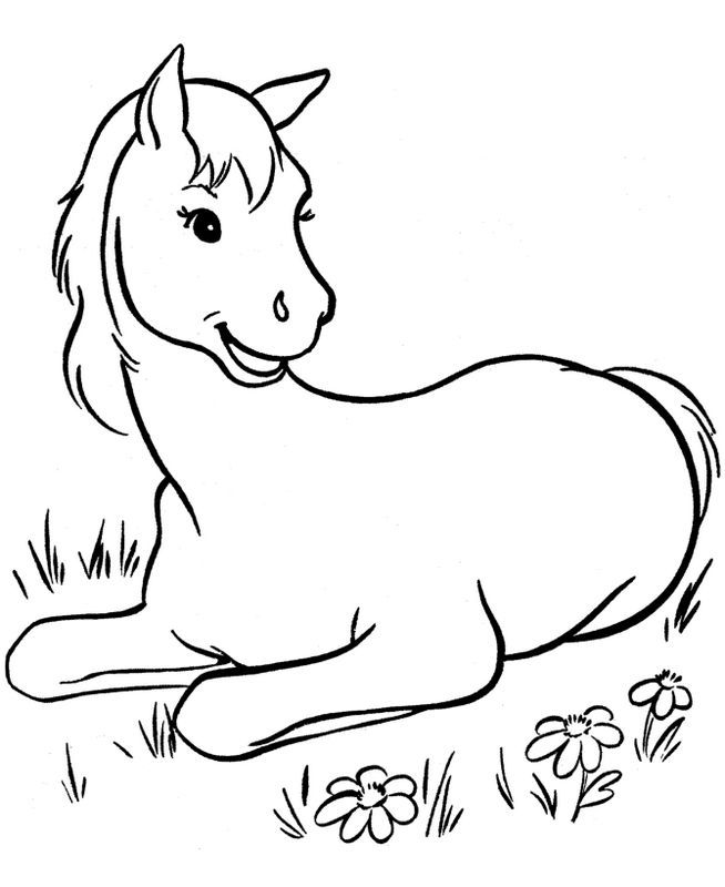 Ausmalbild Kleine Fohlen Auf Der Wiese Ausmalbilder Pferde Malbuch Vorlagen Ausmalbilder