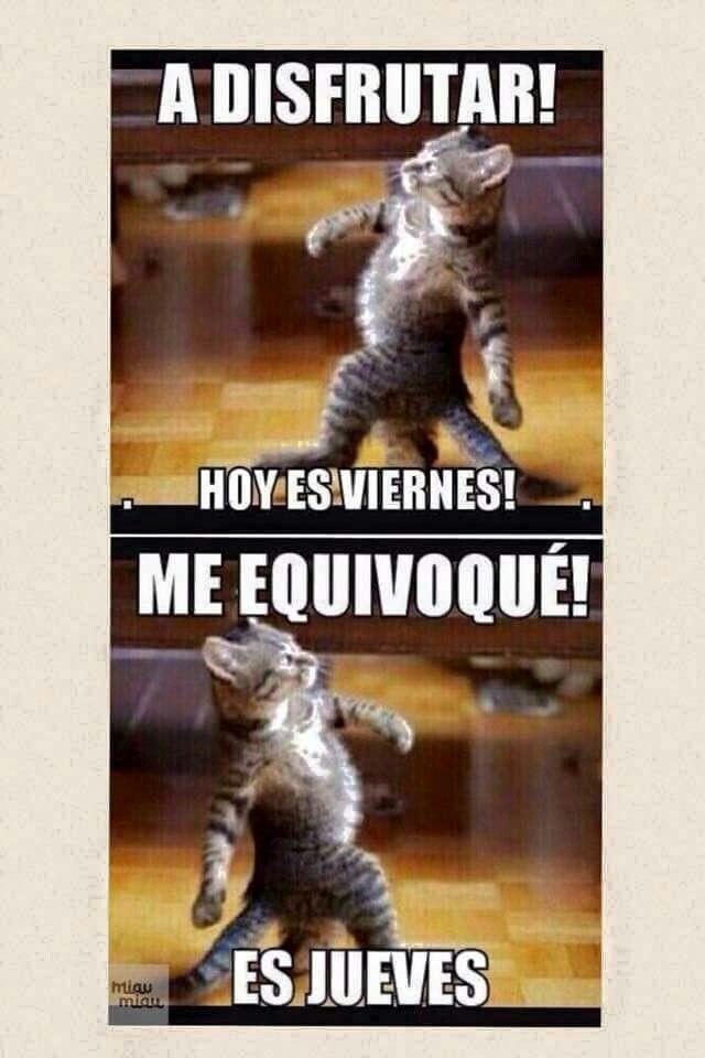 Feliz Jueves Memes Graciosos Loll Chistes Chiste De Gatos