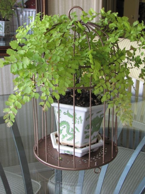 Diy Planters Upcycled Birdcage Planter Great Use For 400 x 300