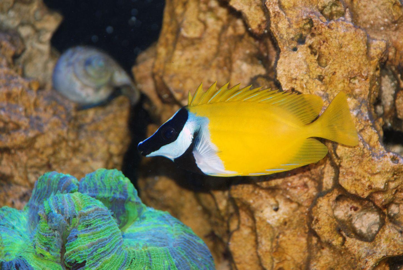 Clean a Fish Tank Fish tank, Aquarium fish tank, Fish