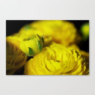 Ranunculus flowers Canvas Print by Tanja Riedel - $85.00