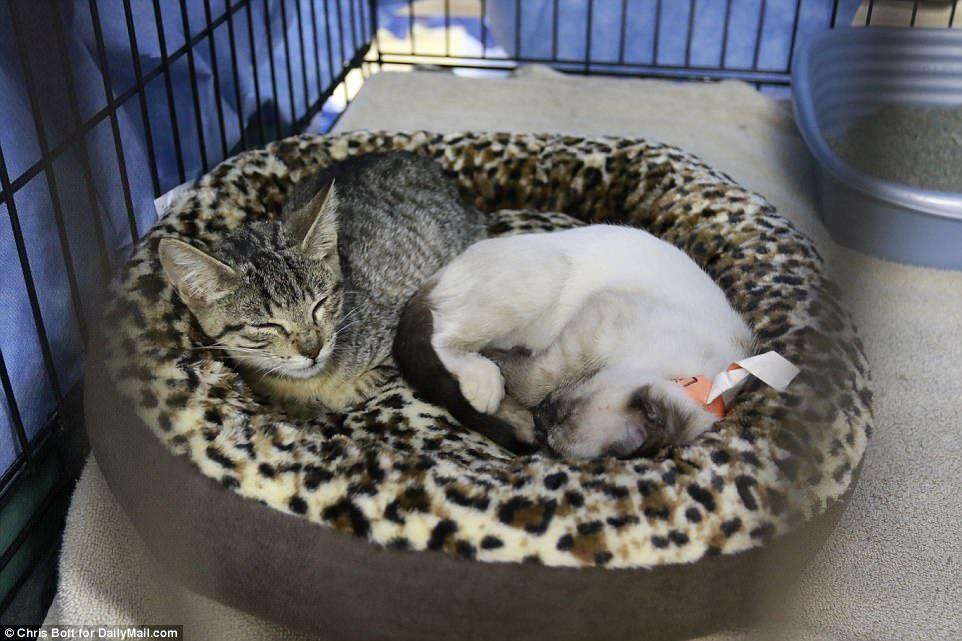 Austin animal shelter last refuge for hundreds of cats and
