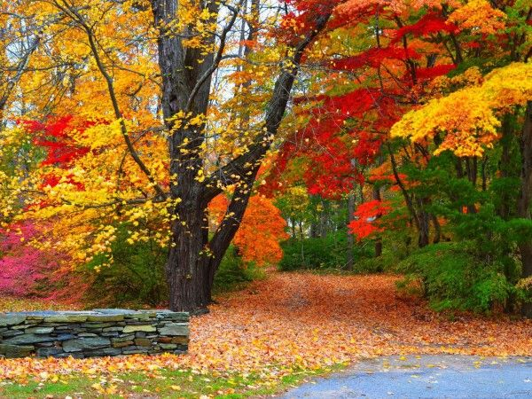 Attachment For Nature Wallpaper With Colorful Autumn Forest And Trees In High Resolution