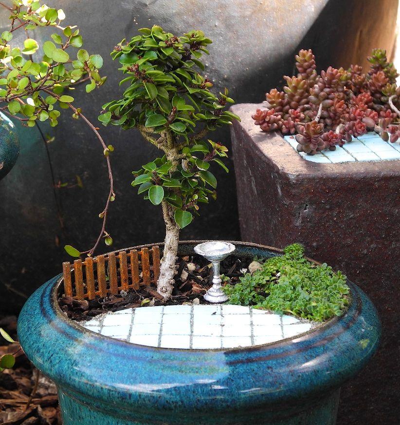The evolution of the miniature garden miniature garden - Miniature plants for fairy gardens ...