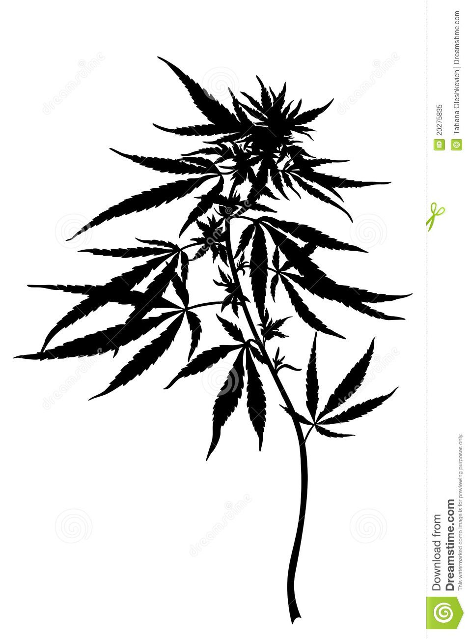 Cannabis Sativa Plant - Download From Over 38 Million High Quality Stock Photos…