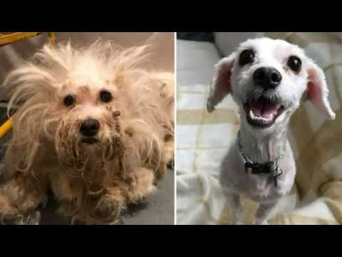 Stray Dog Holland Finally Gets Her Matted Fur Shaved Off And Her Smile Says It All A Stray Dog Holland Was Dropped Off At An Open Rescue Dogs Dogs Cat Body