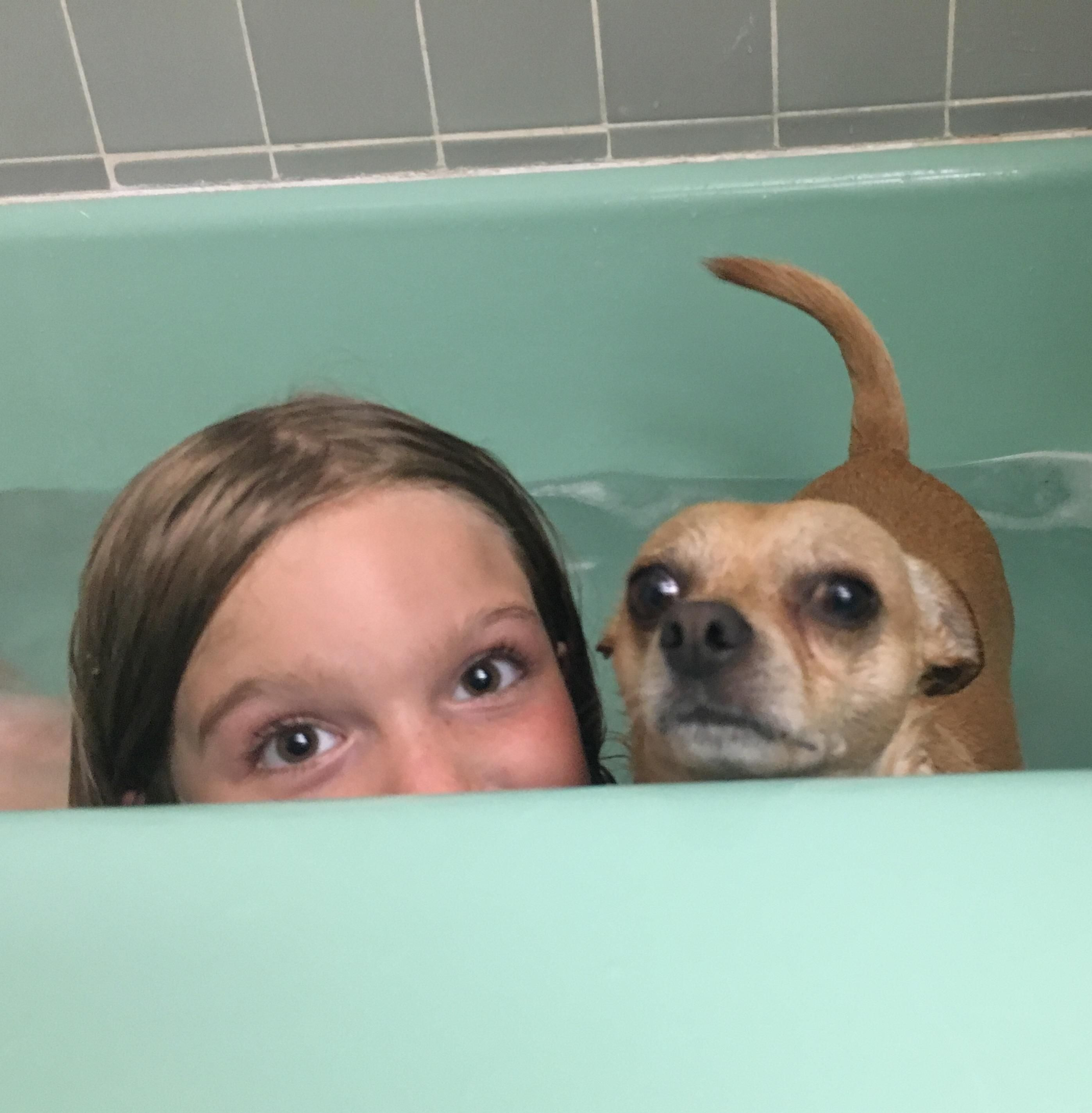 Bath Time! Anyone else have a Chi obsessed with water? (i
