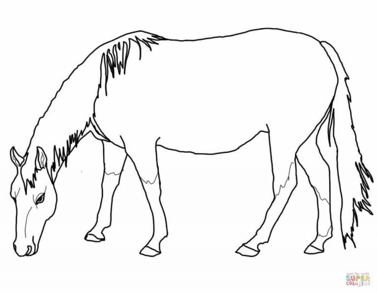 Quarter Horse Coloring Pages Display