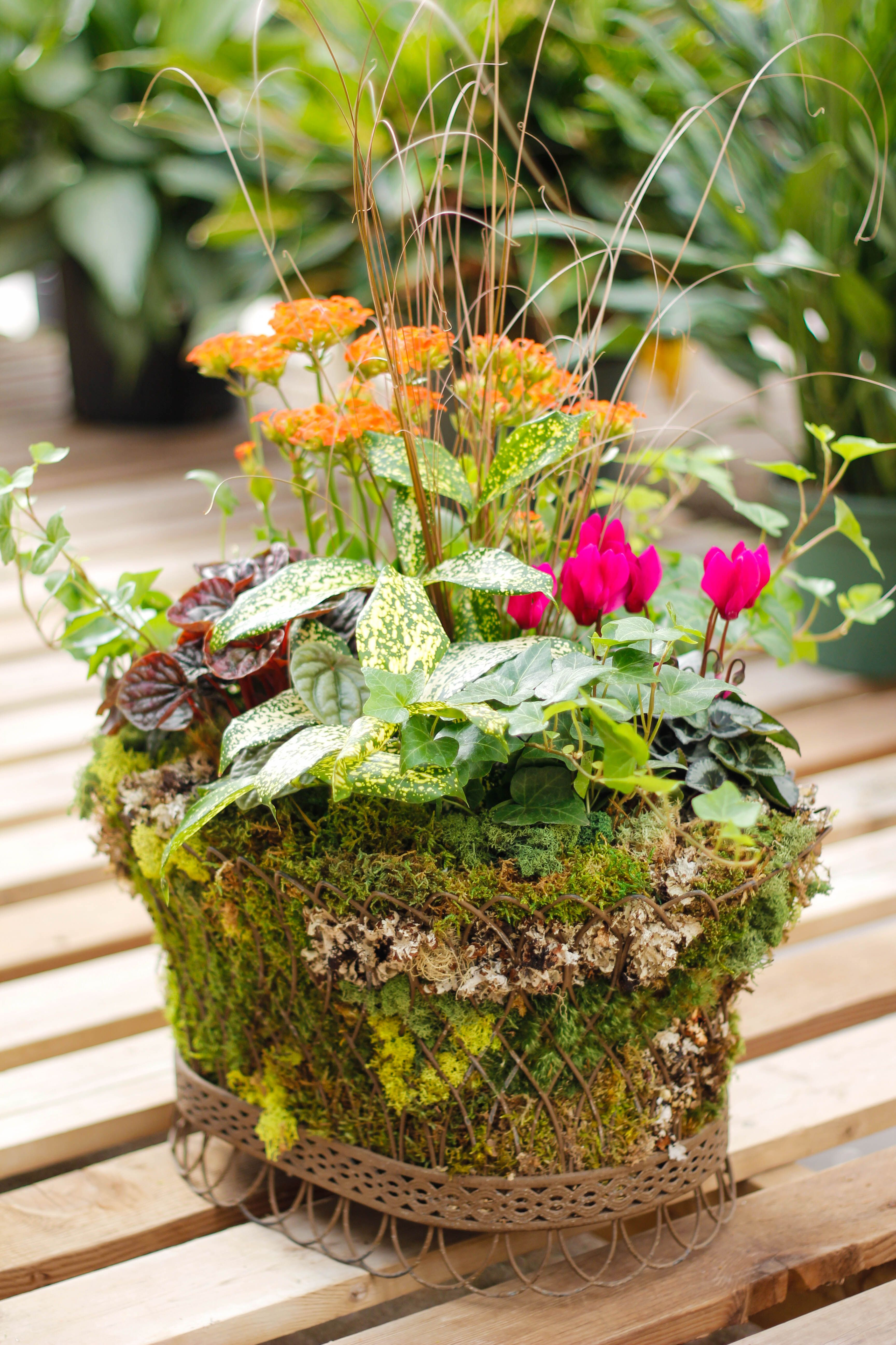 Dish gardens make great gifts or beautiful decorations in
