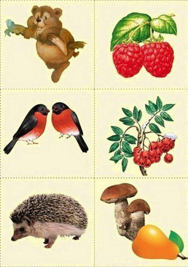 картинки какое дикое животное что ест какой-то