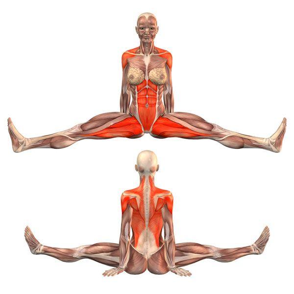 Seated pose, legs wide apart, back straight - Upavishtha Konasana ...