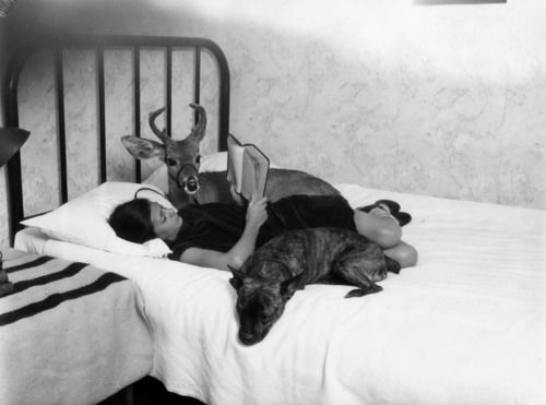 Beverly Hills, 1927: a girl reads in bed with her dog and pet deer.