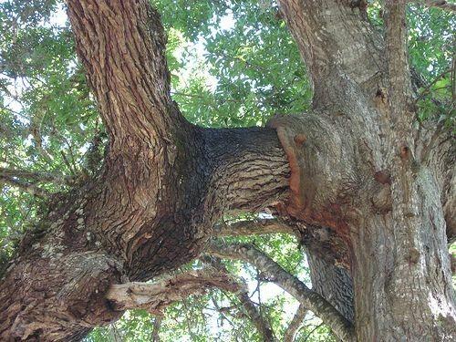 addb785540bba42fe007c1eabcd51a26 - Edgar's Gardening And Tree Service
