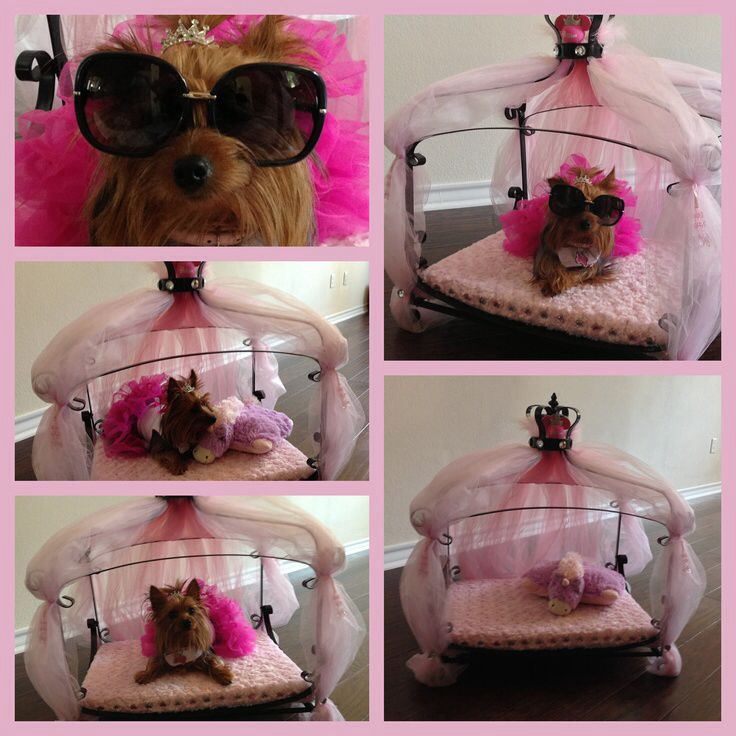 Yorkie princess bed!