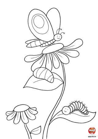 Papillon dessin recherche google coloriages pour - Dessins papillons ...