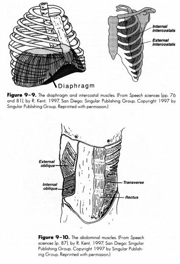 Respiratory Muscles. Repinned by SOS Inc. Resources
