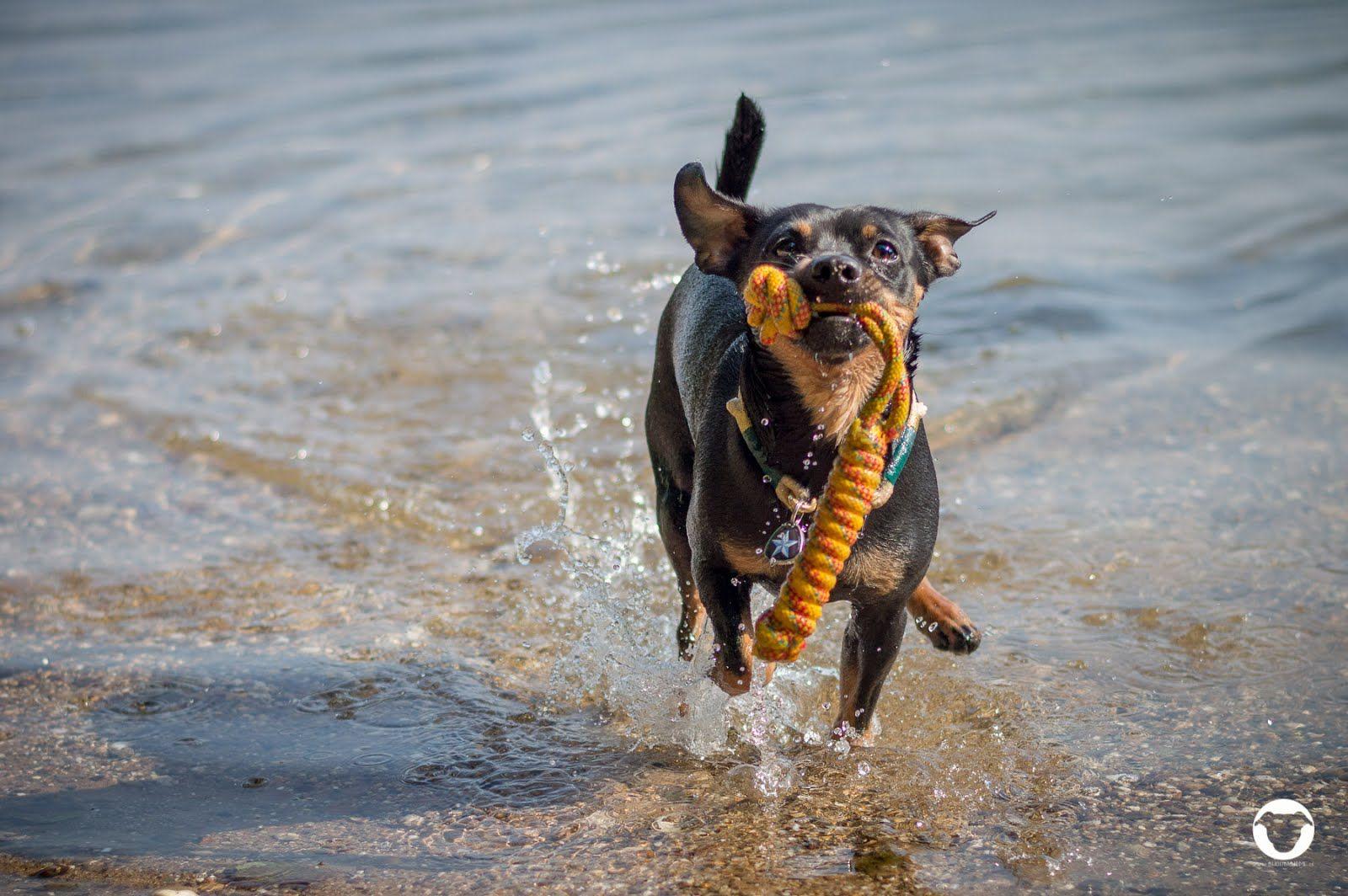 Schwimmen Mit Hund Nrw