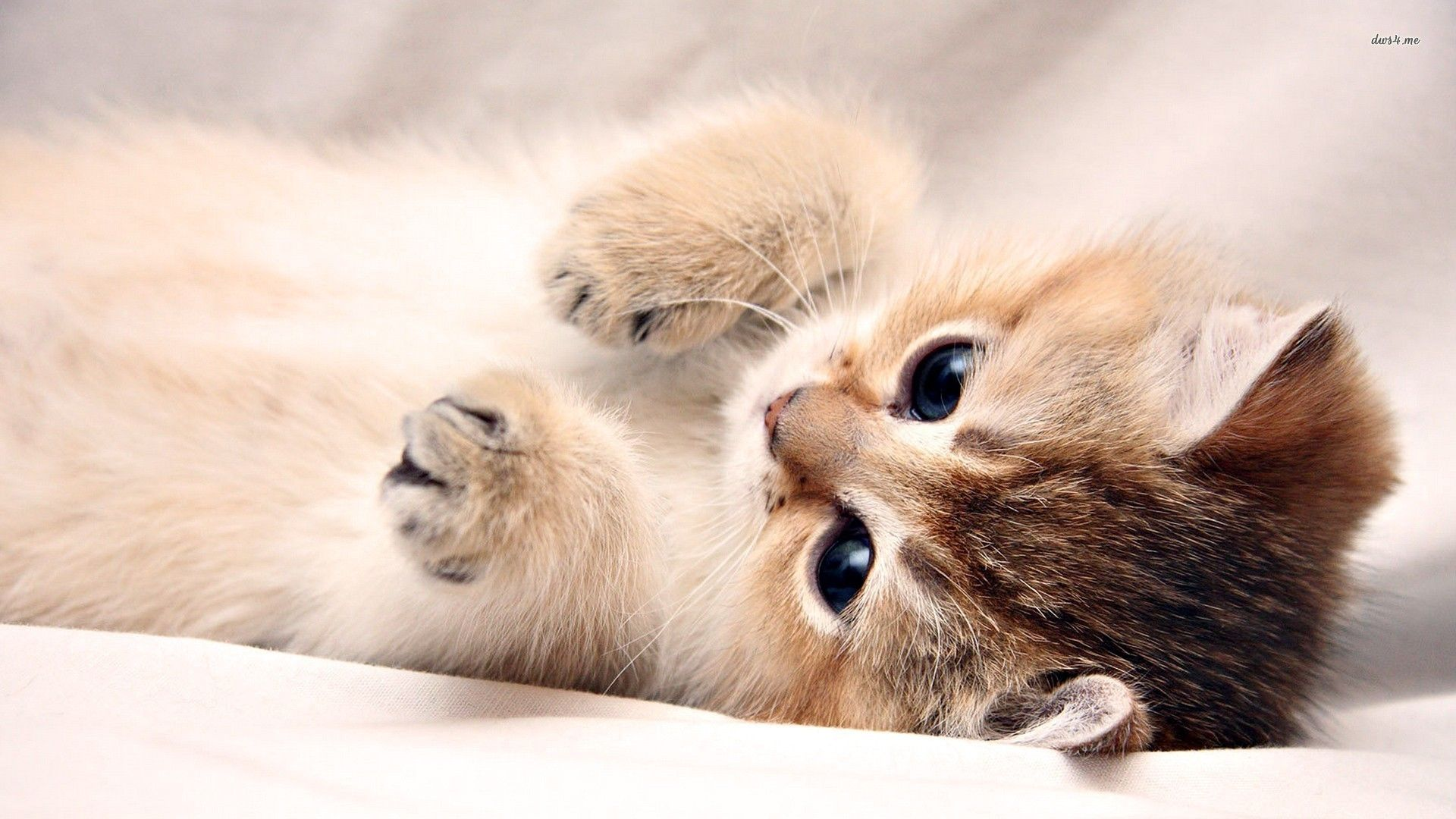 Kitten wallpaper 1280x800 - Download Best HD Desktop Wallpapers .