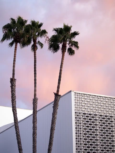 Rose Quartz And Serenity Sky Palm Trees Palm Springs Ca In 2019