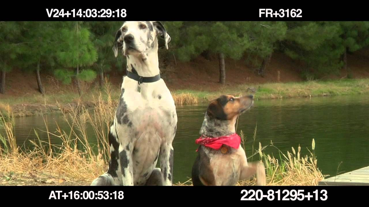 Dog Tested Bloopers