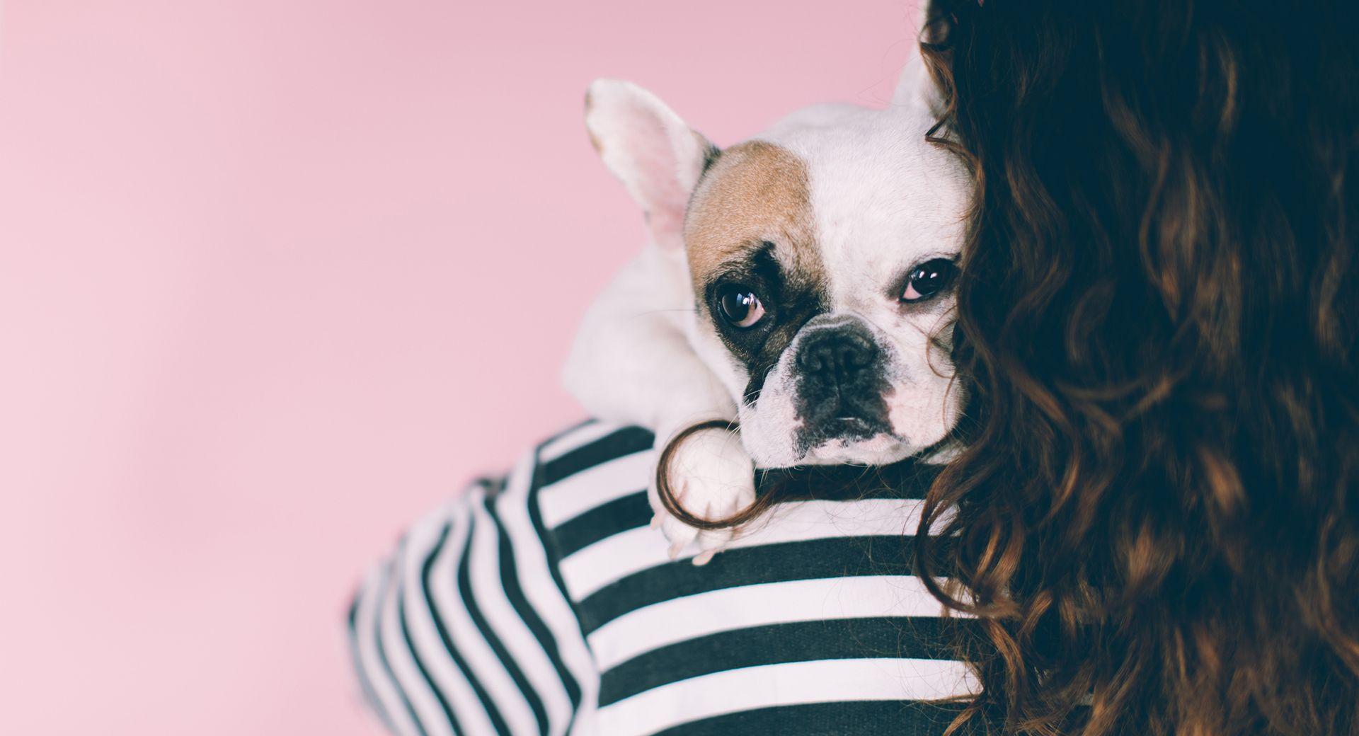 Kết quả hình ảnh cho bulldog love Emotional support