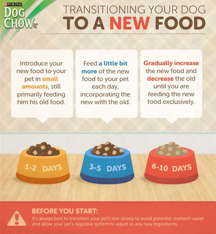Changing dog food a stepbystep guide dog food recipes