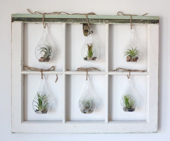 Custom Air Plant Window  made to order in Brooklyn by RootsinRust