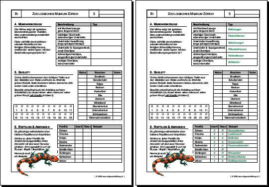 Biologie | Arbeitsblatt Reptilien Amphibien | 5000 Übungen ...