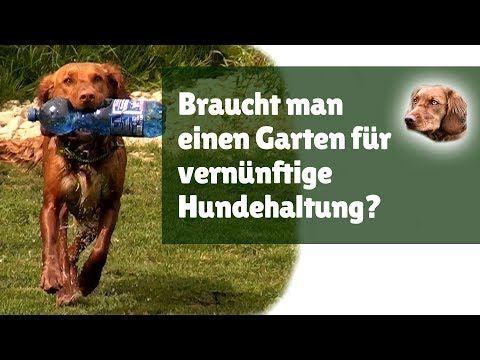 Dominanter Hund Gibt Es Dominantes Verhalten Bei Hunden Tatsachlich Youtube Hundehaltung Hunde Und Hundepension