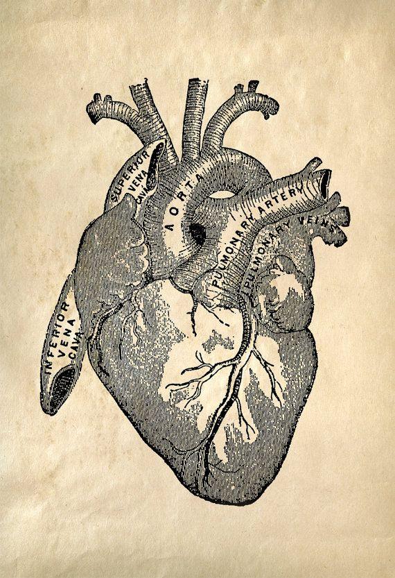 Heart Anatomy Vintage Reproduction Print. Human Biology Chart ...