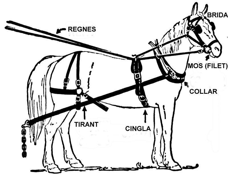 Arreus Del Cavall 1