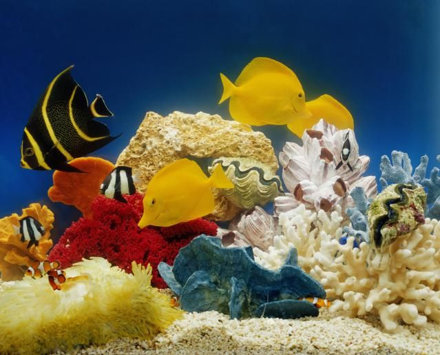 What you need to start a saltwater aquarium saltwater for What do i need for a fish tank