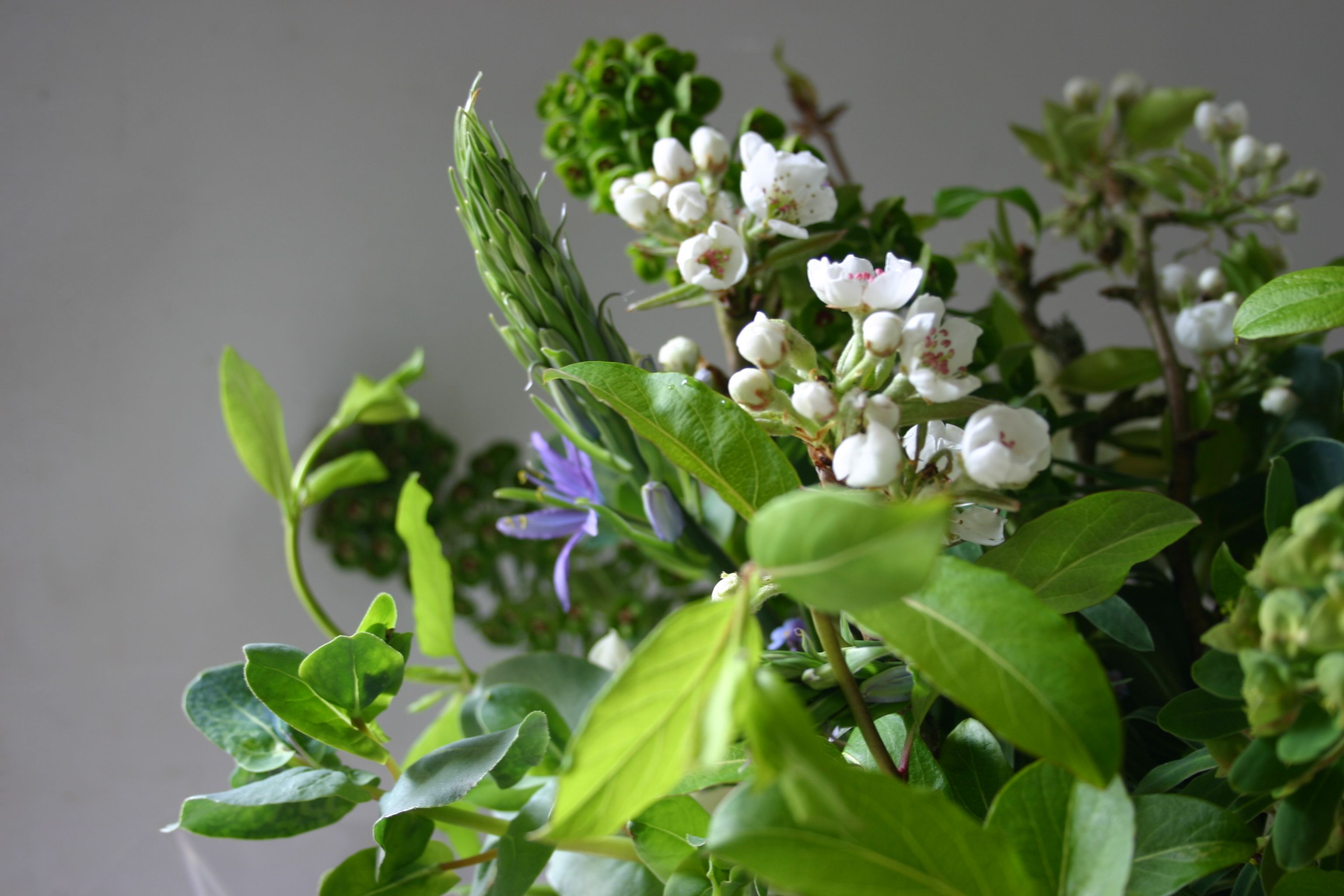 Cerinthe Pear Blossom And Camassia All Grown Cut And Tied At Www