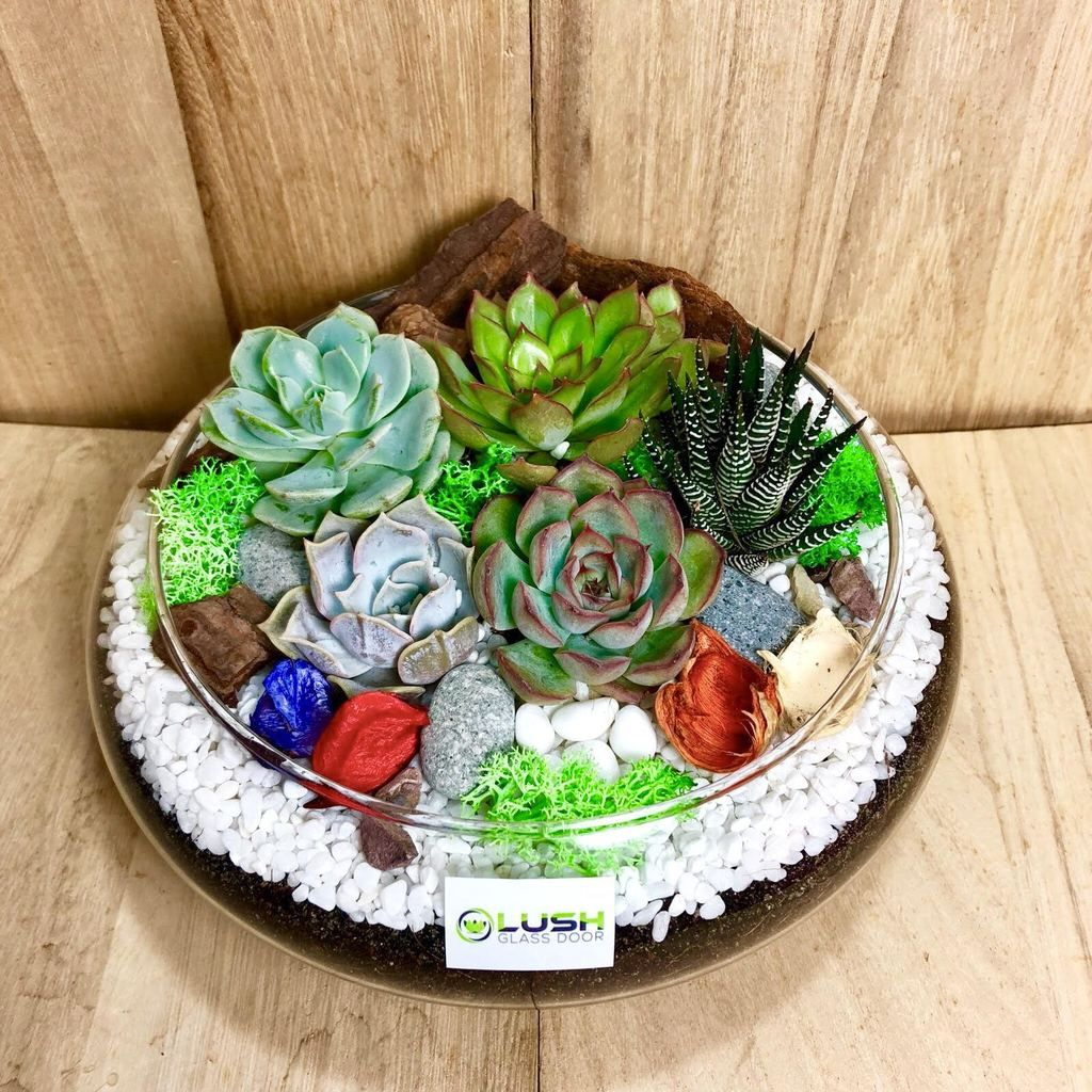 Lovely athena succulents arrangement mid range terrarium